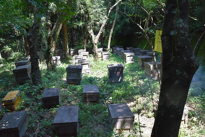 森の奥深くにある稲田養蜂場